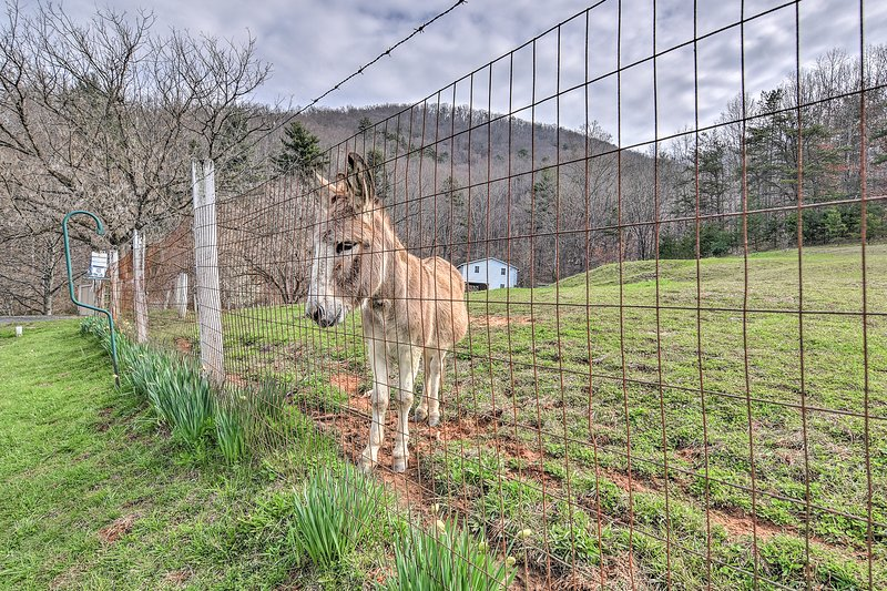 Stop by and say hello to the resident donkey!