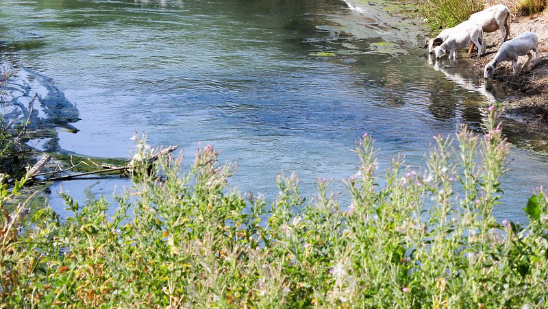 river Genil