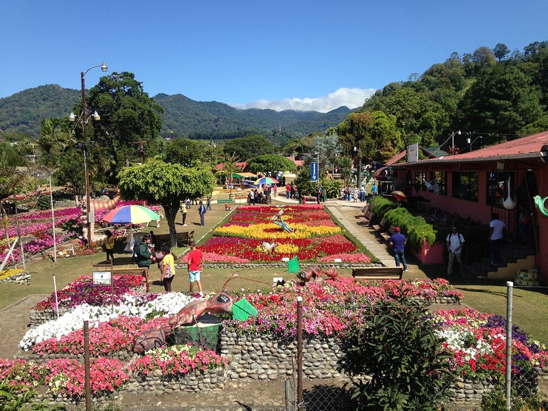We have gorgeous flowers year 'round in Boquete.