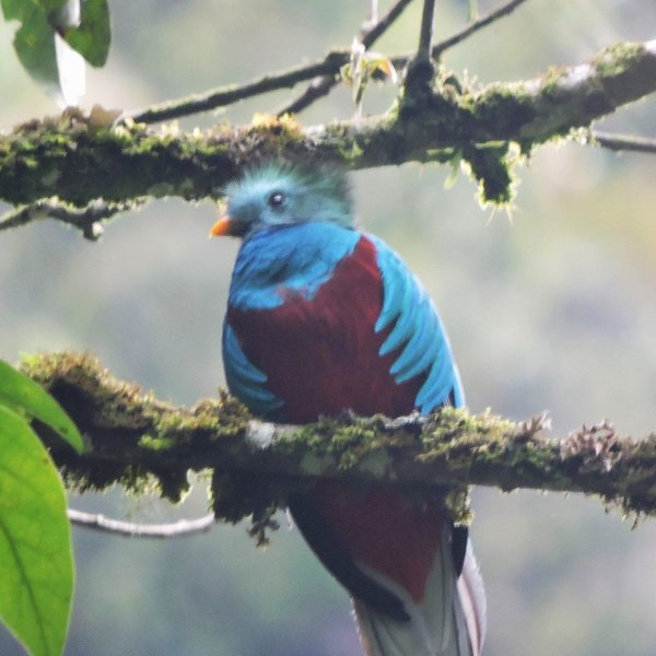 The gorgeous, elusive Quetzal.  We took this photo on a nearby hike.