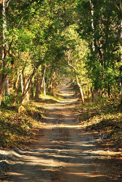 carretera del pueblo