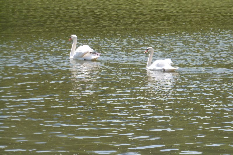 Some of the neighbours - others include ducks and moorhens