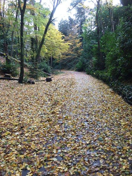 Alum a pie de pueblo Westbourne en el otoño