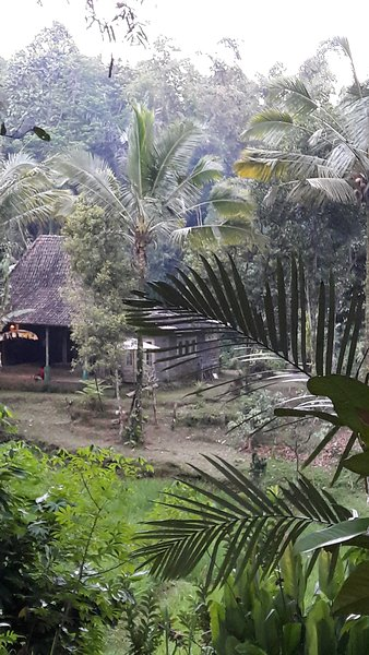 our loge in the jungle 180 degree ricefield view