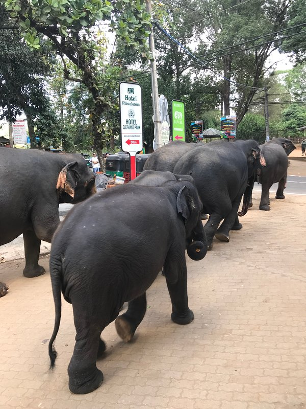 Ancient Gardens - Pinnawala elephant orphanage - Surrounding area