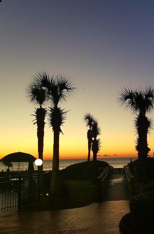 la salida del sol por la mañana a partir de las palmas
