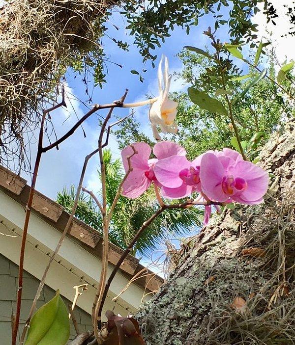 Schöne Orchideen wachsen wilde auf den Bäumen