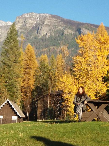Pines amarillas en otoño