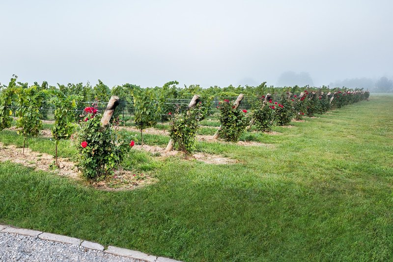 On Seven Vineyard