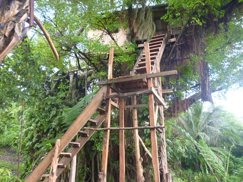 The Swiss Family Robinson Tree House, holiday rental in Vanuatu