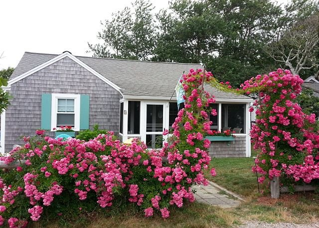 Cape Cod cottage-Just 150 feet to Sea Street Beach, location de vacances à South Harwich