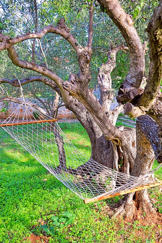 Relax on the Hammock in the Backyard