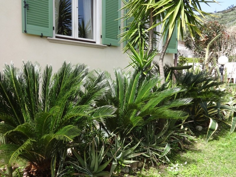 the angle of Cycas