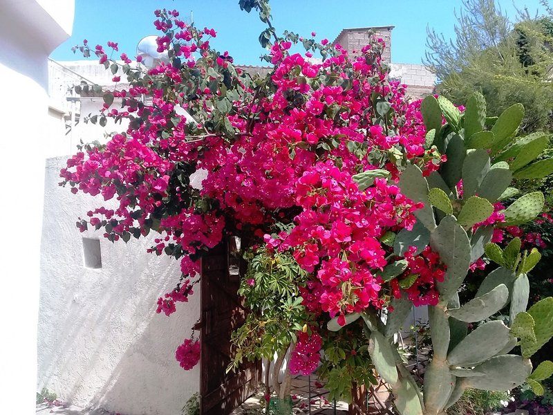 BOUQUET a cosy charming cottage with patio and little garden, vacation rental in Kalyves