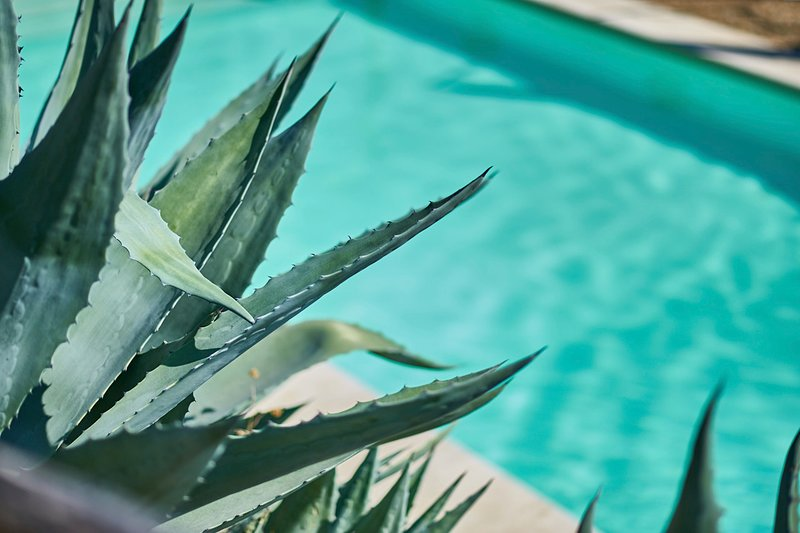 Pool view with agave