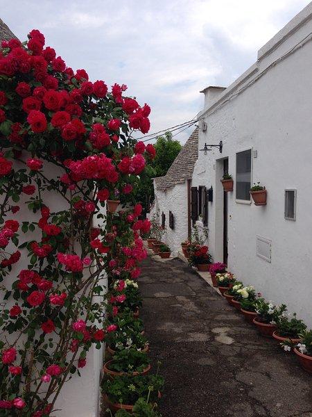 Trullo 'Vicolo Fiorito', holiday rental in Alberobello