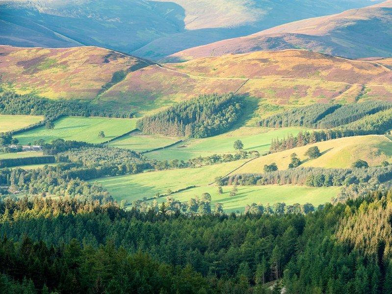 Beautiful Glentress Forest