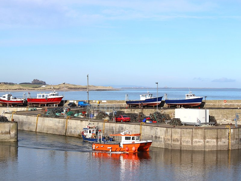 Enjoy  boat trips to the Farne Islands from the nearby harbour