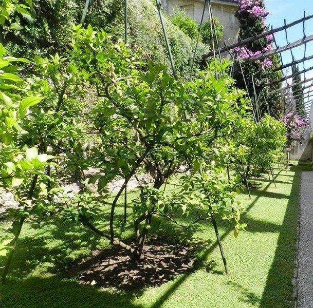 jardín de limón