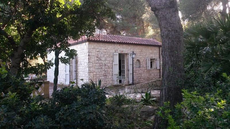 Huset i tallskogen