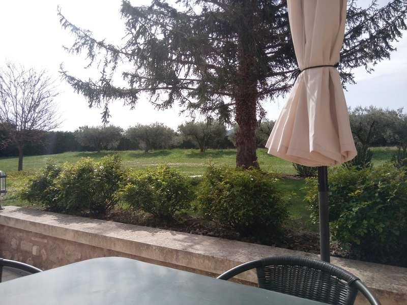View in front of the house: a large olive grove.