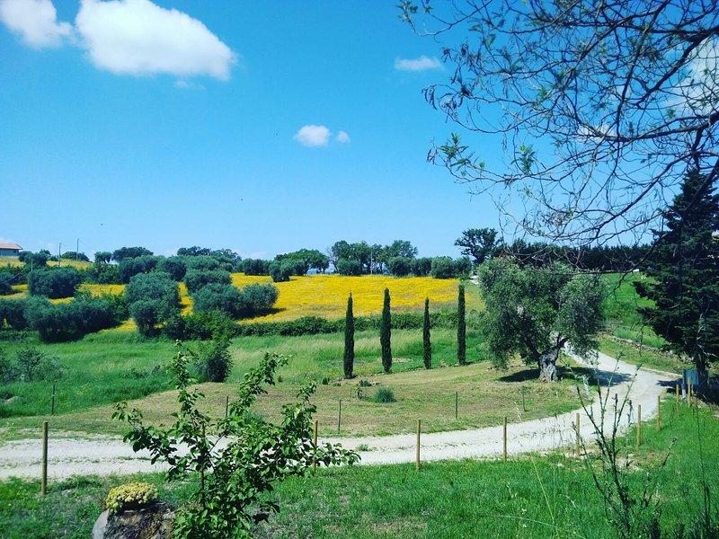 Casa vacanze Poggio Bestiale, vacation rental in Montiano