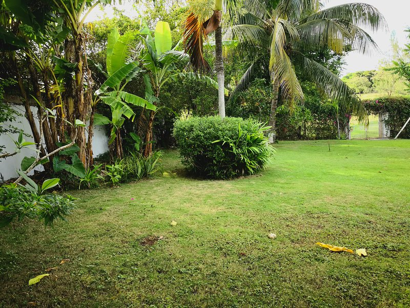 Lush garden with lots of fruit trees