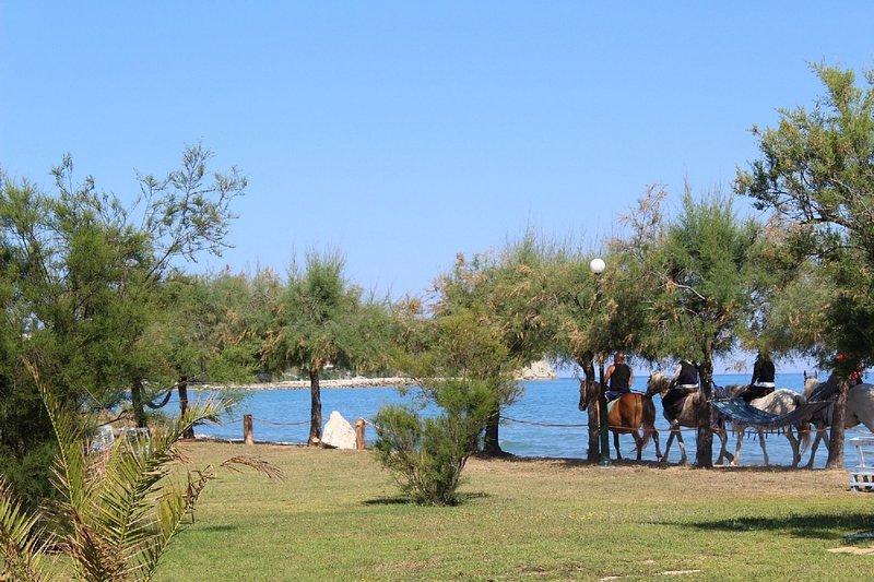 Apartment Atlantis in front of the beach in the north of Corfu island, location de vacances à Roda