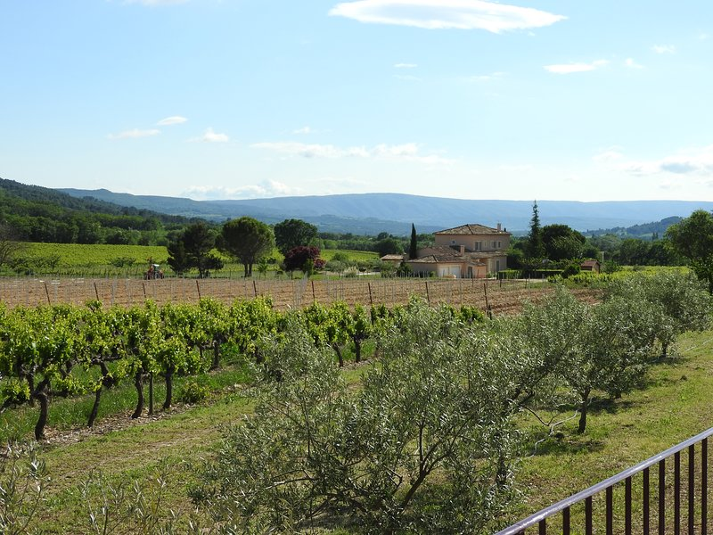 Views of the vines, neighboring properties and the Luberon