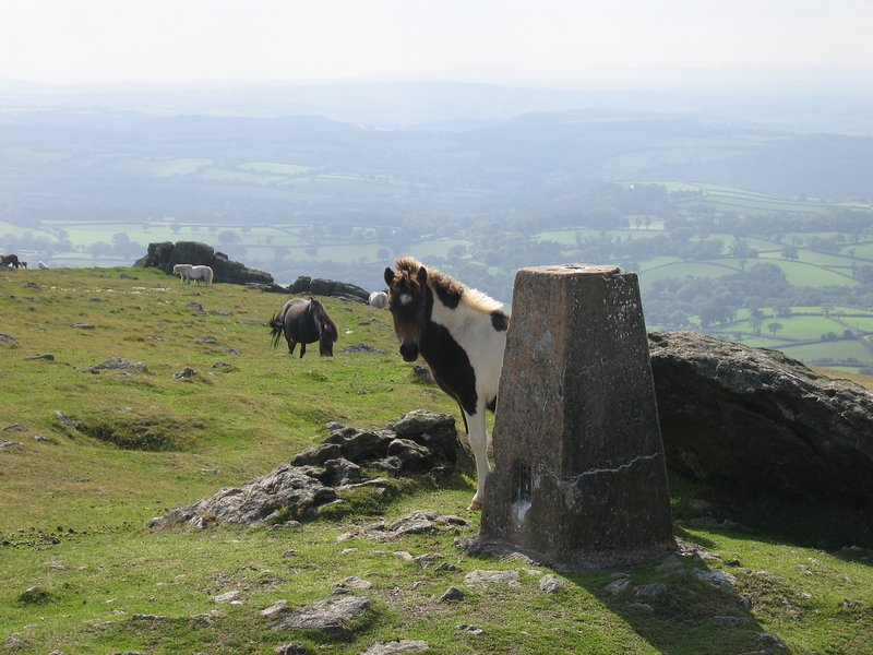 Who knows what you will discover on Dartmoor!