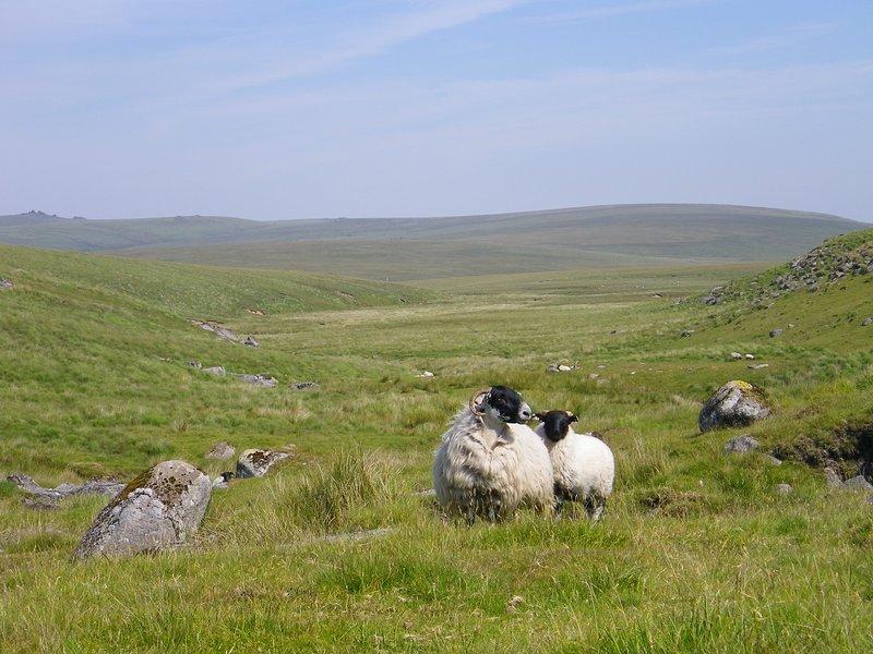 If you like walking, you will love Dartmoor.