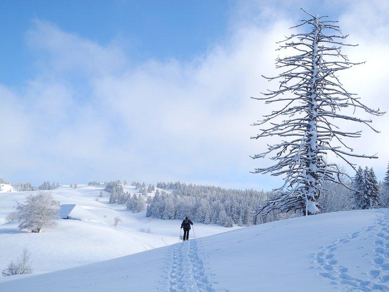 Snowshoeing in the Haut-Jura