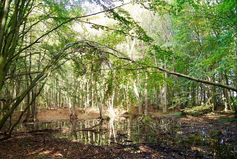 In de omgeving. Net als in het sprookje bos !!!