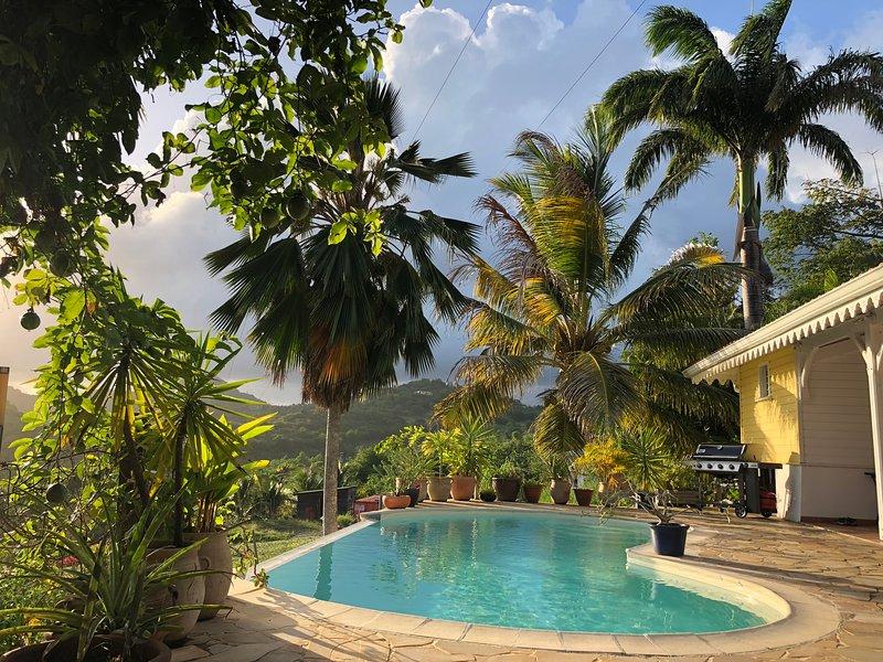 Piscina, palmeiras, coco ...