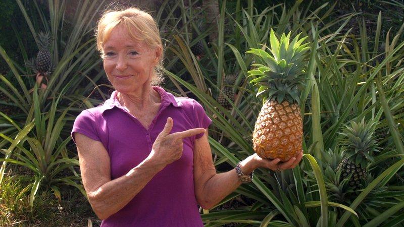 Pineapple WANDA, molto fresco per gli ospiti.