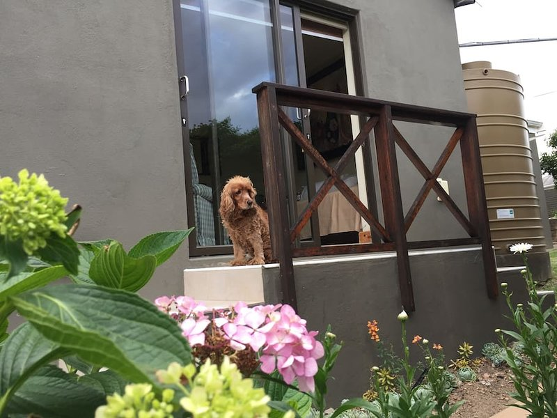 ZOOOP Guest House with WIFI sleeps 3, casa vacanza a Greyton