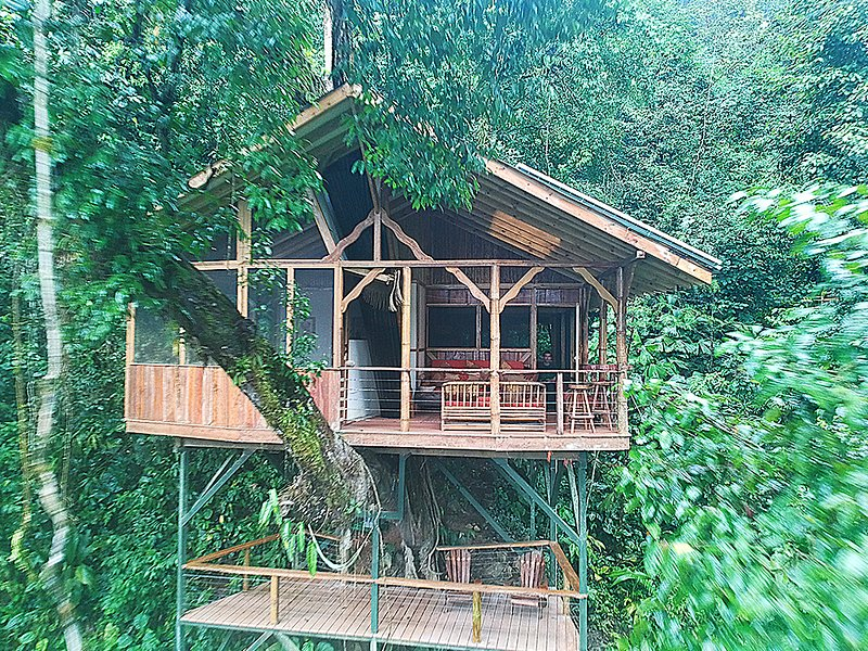 El Fenix, your treetop home away from home!