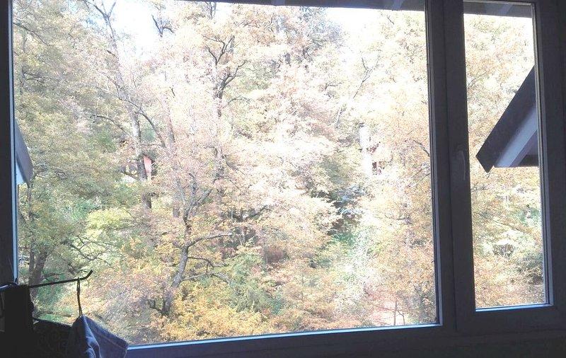 Vistas del bosque autóctono desde las habitaciones