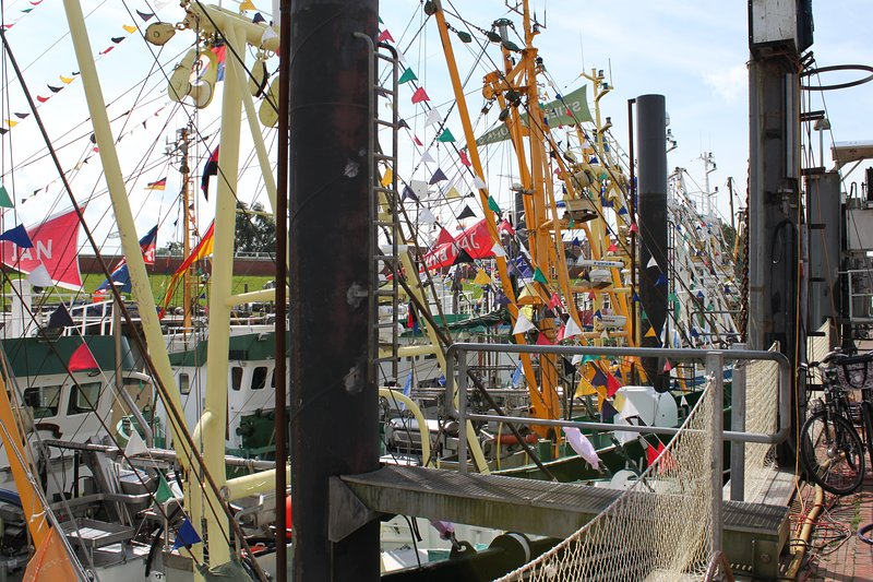 barcos de camarão decorados do Porto Festival Ditzumer