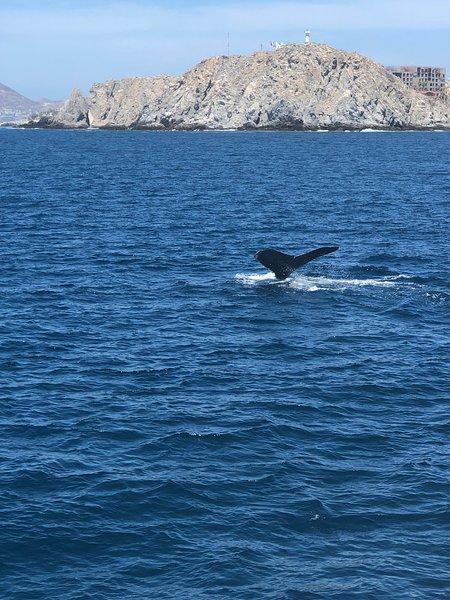 Osservazione delle balene
