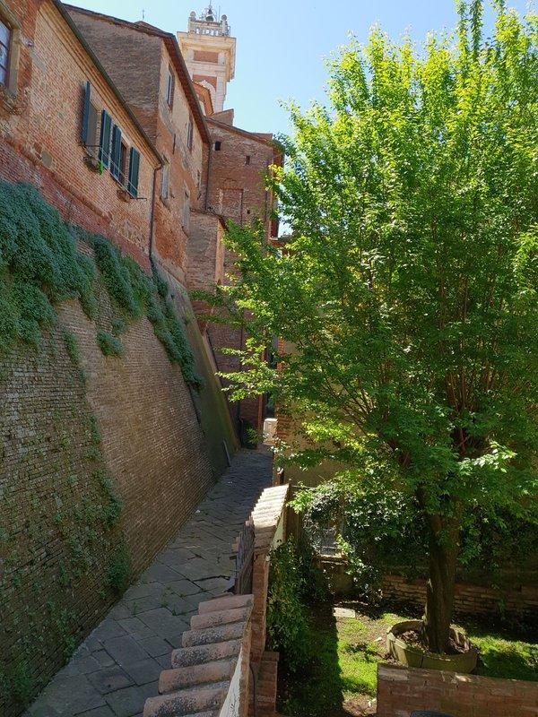 Vista desde el jardin