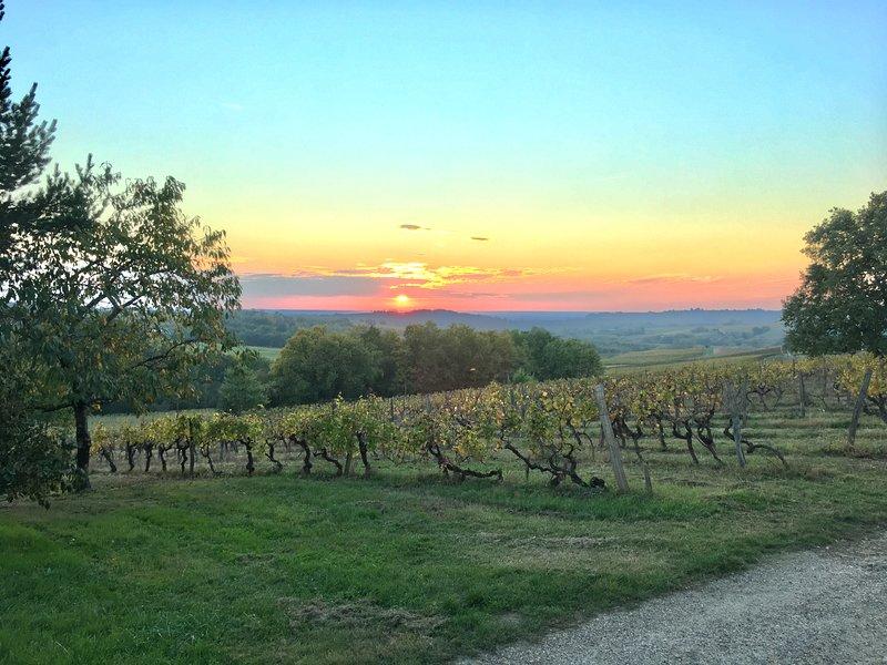 Beautiful vineyard views!