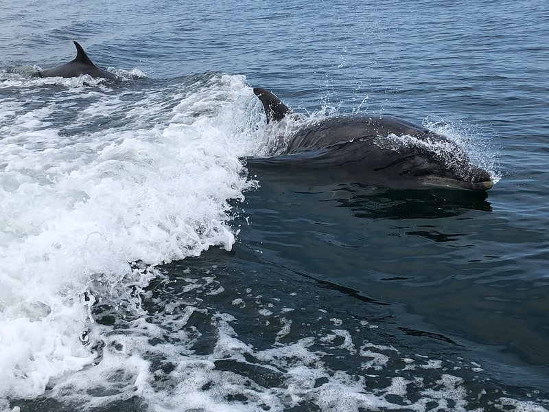 Dolphins off Beadnell bay Can been seen from Lounge , if you're lucky!!
