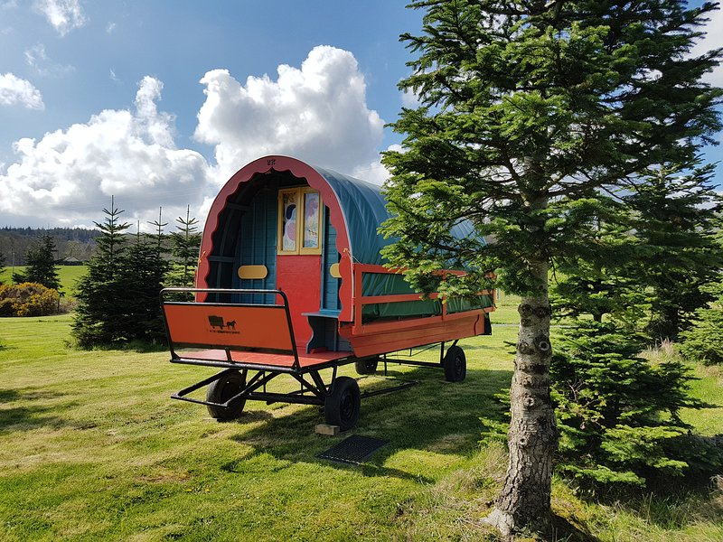 Foxglove Glamping Gypsy Caravan, holiday rental in Donard