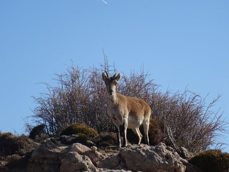 Capricornio en Sierra Nevada