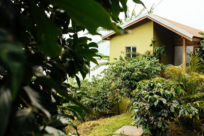 The Peacock Cottage is tucked away on our privately owned coffee farm in the Blue Mountains.
