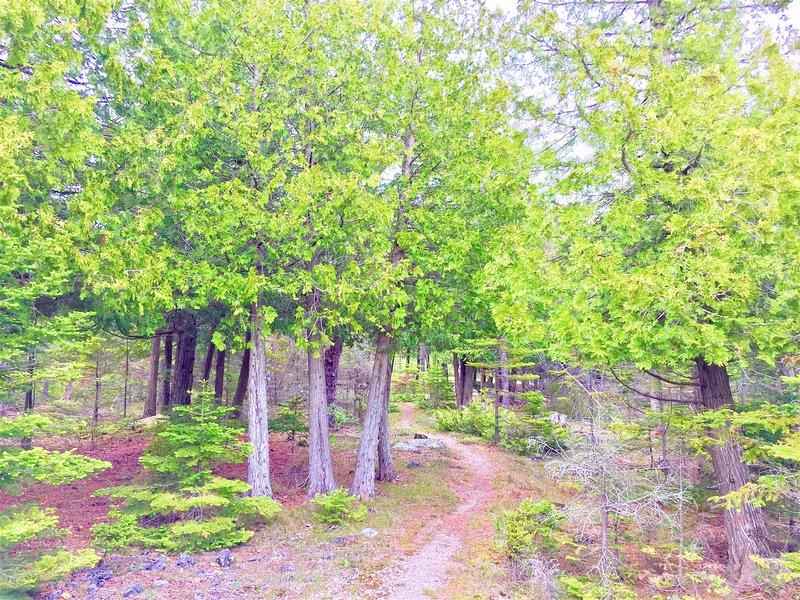 Woods rondom het huisje