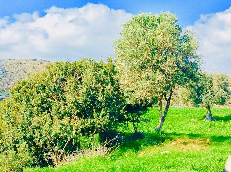 Maroni countryside. From Cyprus's Retreat, Village Maroni, Larnaca district, Cyprus.