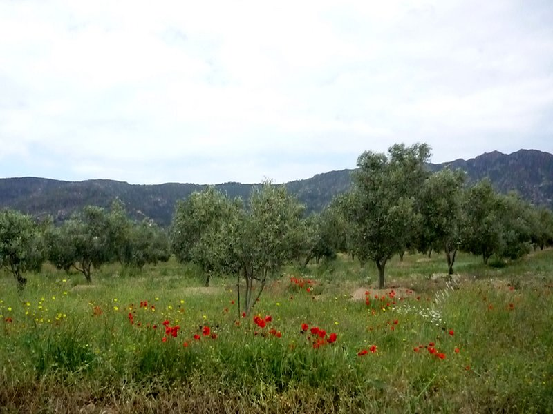 """Penthouse Port Canigo Rosas"" Rosas and fields of poppies and olive trees"