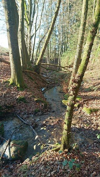 Creek at the Dragon House.